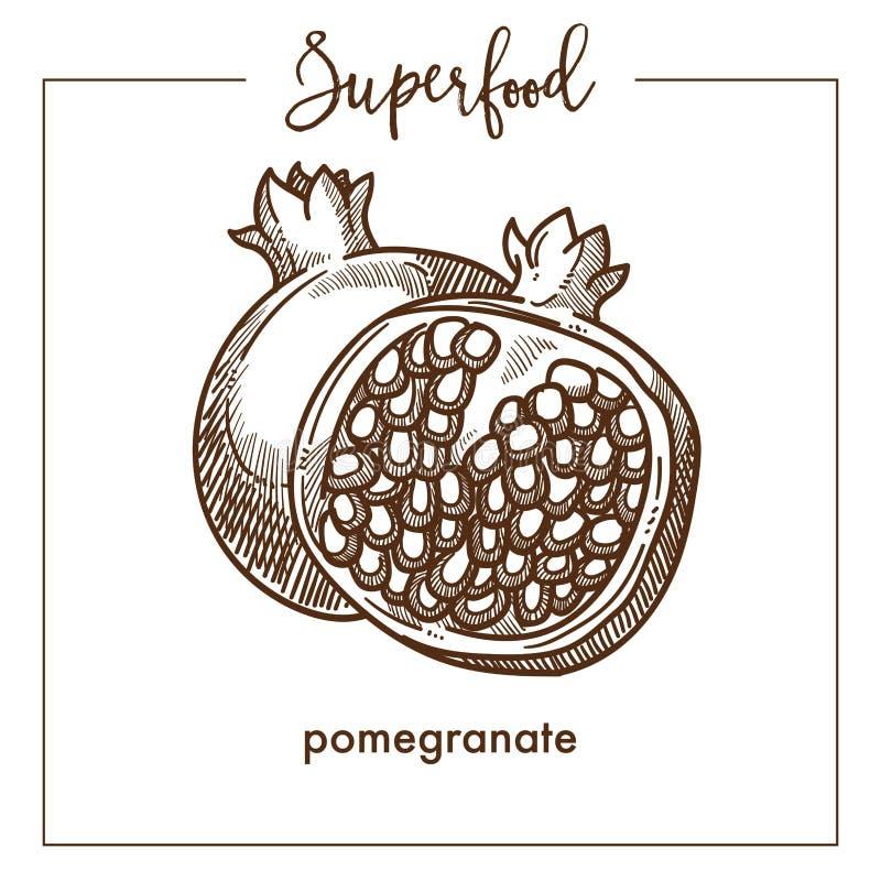 Il melograno ha tagliato nello schizzo a metà monocromatico di seppia del superfood royalty illustrazione gratis