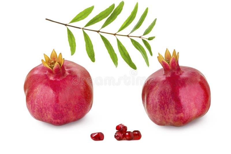 Il melograno maturo rosso due fruttifica, il ramo con il melograno va e grani isolati su fondo bianco fotografia stock