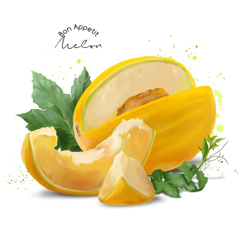 Il melone giallo e spruzza della pittura dell'acquerello illustrazione vettoriale