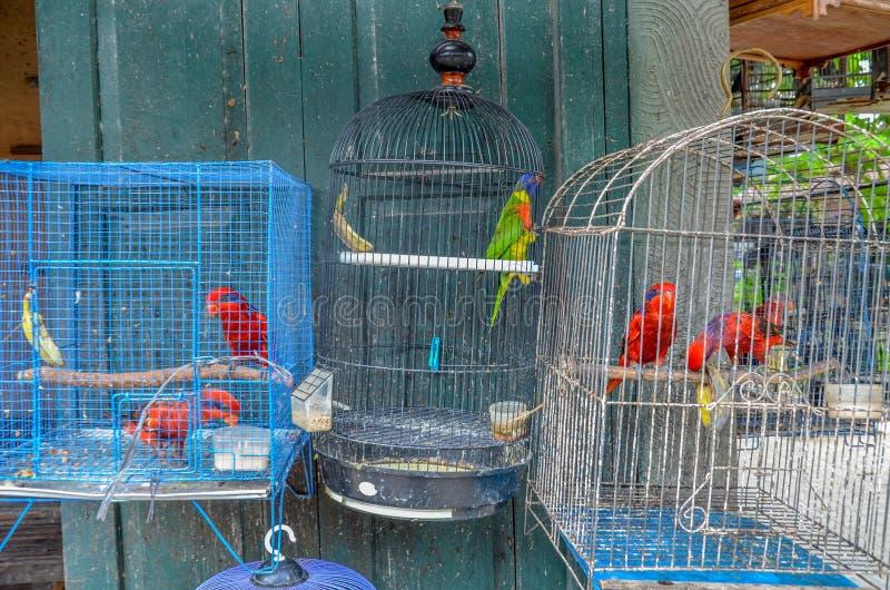 Il mercato degli uccelli, Yogyakarta, Java, Indonesia fotografie stock