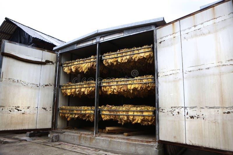Il metodo classico di essiccamento del tabacco nel forno immagini stock