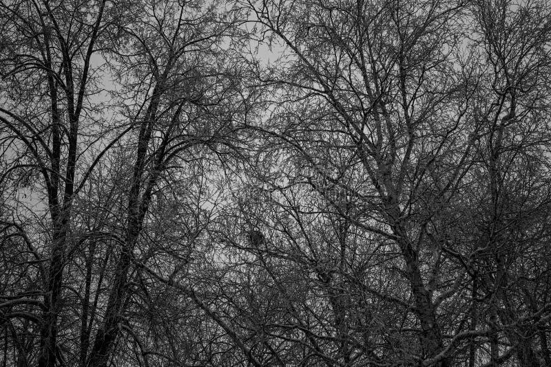 Il mezzo del legno i grandi alberi scuri immagini stock libere da diritti