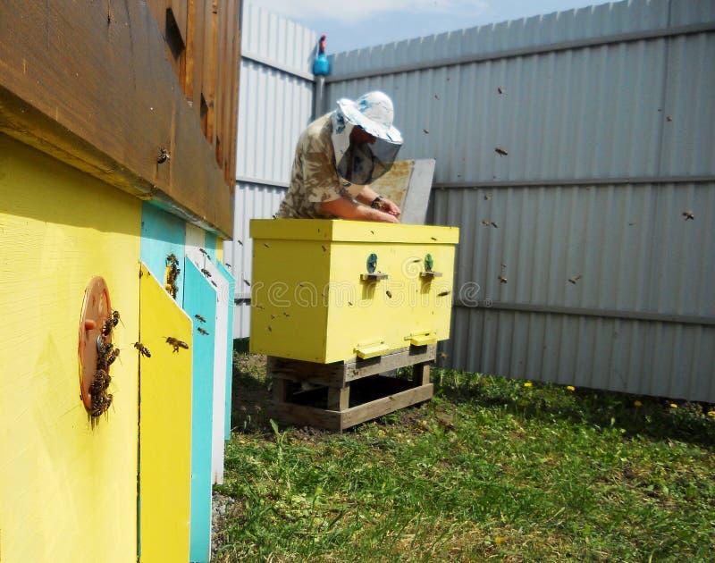 Il miele, ape fotografia stock