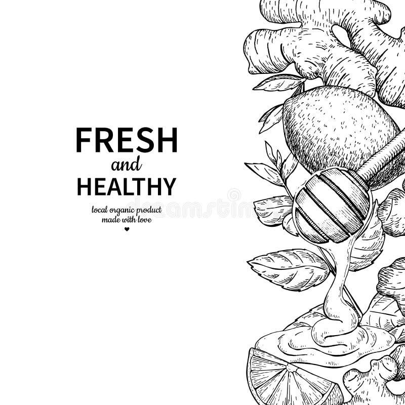 Il miele, lo zenzero, il limone e la menta vector il disegno del confine Spoo di legno illustrazione di stock