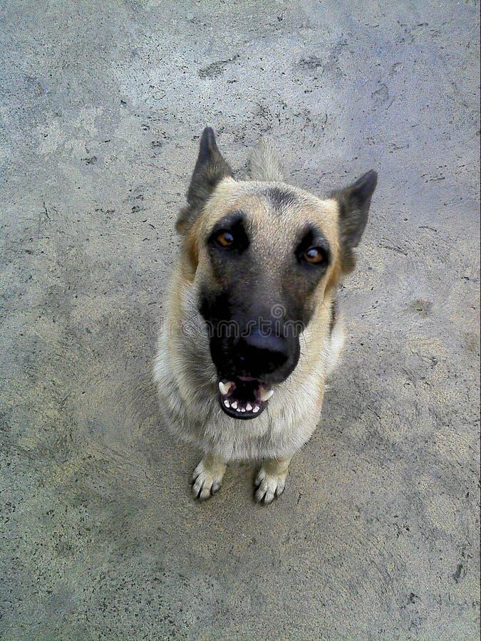 Il mio cane fotografia stock