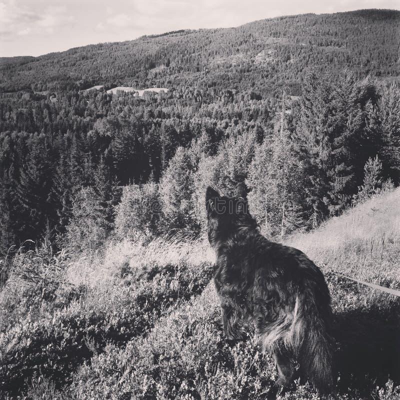 Il mio cane meraviglioso fotografia stock libera da diritti