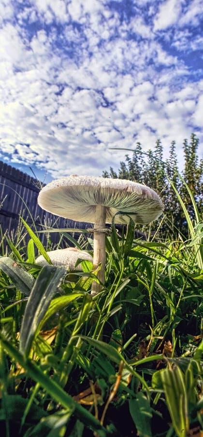 Il mio cortile con i funghi fotografia stock libera da diritti