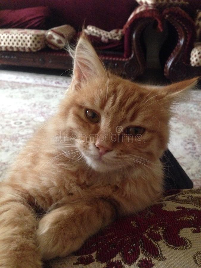 Il mio gattino immagine stock libera da diritti