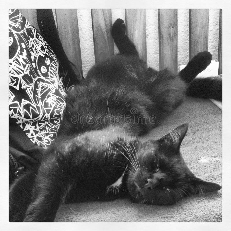 Il mio gatto immagine stock libera da diritti
