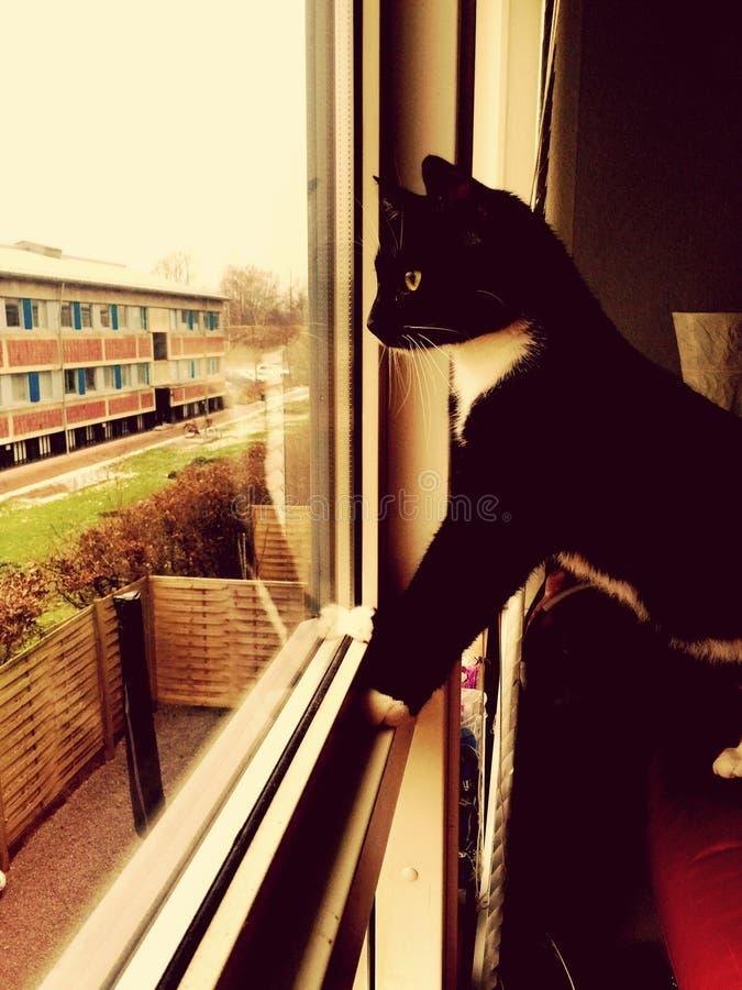 Il mio gatto immagine stock