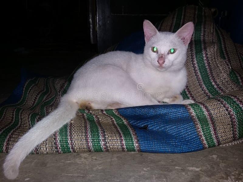 Il mio gatto fotografie stock