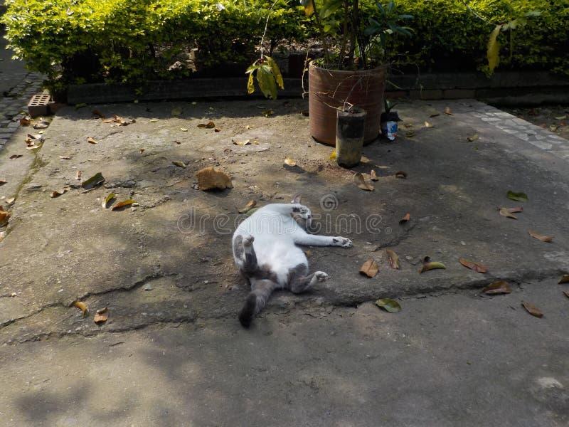 Il mio gatto che prende un pelo fotografia stock libera da diritti