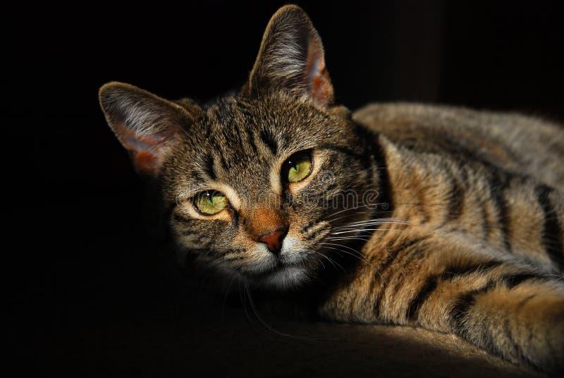 Il mio gatto che si rilassa al sole fotografia stock libera da diritti