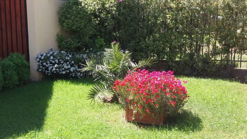 Il mio giardino immagini stock