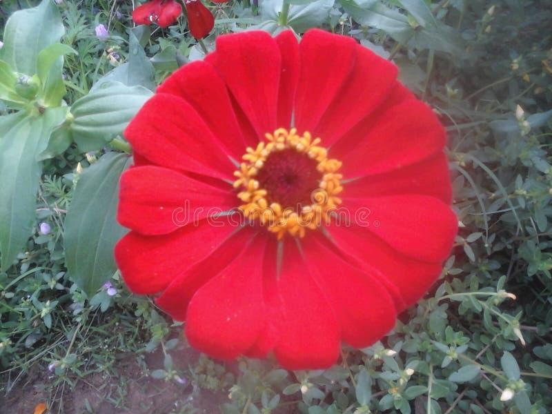 Il mio giardino floreale fotografia stock libera da diritti