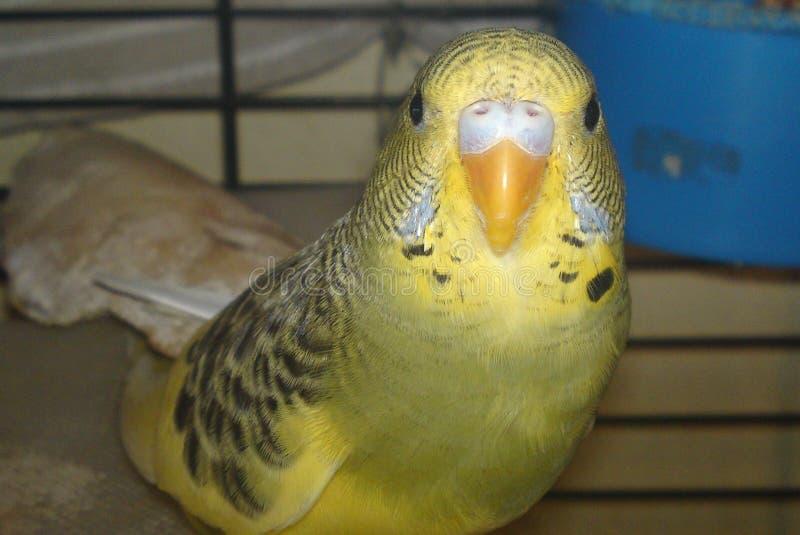 Il mio uccello dolce fotografia stock libera da diritti