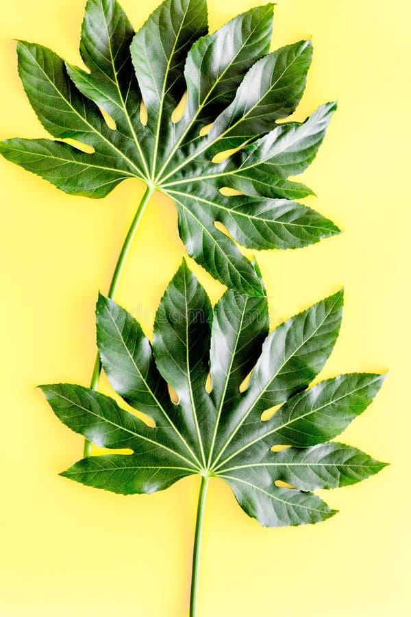 Il modello del ` esotico s della pianta copre di foglie sulla vista superiore del fondo giallo fotografie stock