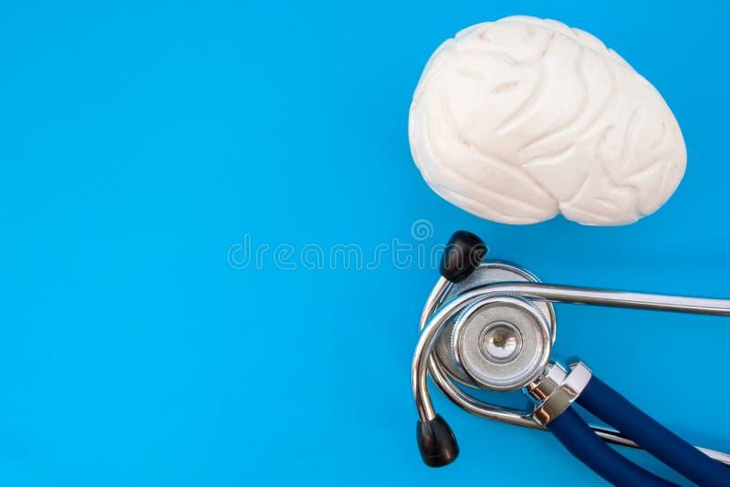Il modello di studio anatomico del cervello e lo stetoscopio su fondo blu occupano la metà della foto, nel secondo spazio vuoto a immagini stock libere da diritti
