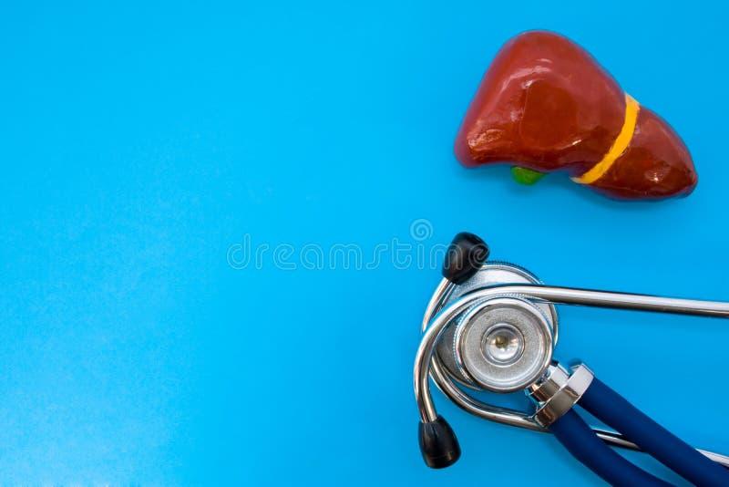 Il modello di studio di fegato o hepar anatomico e stetoscopio su fondo blu occupa la metà della foto, nel secondo spazio vuoto a fotografia stock