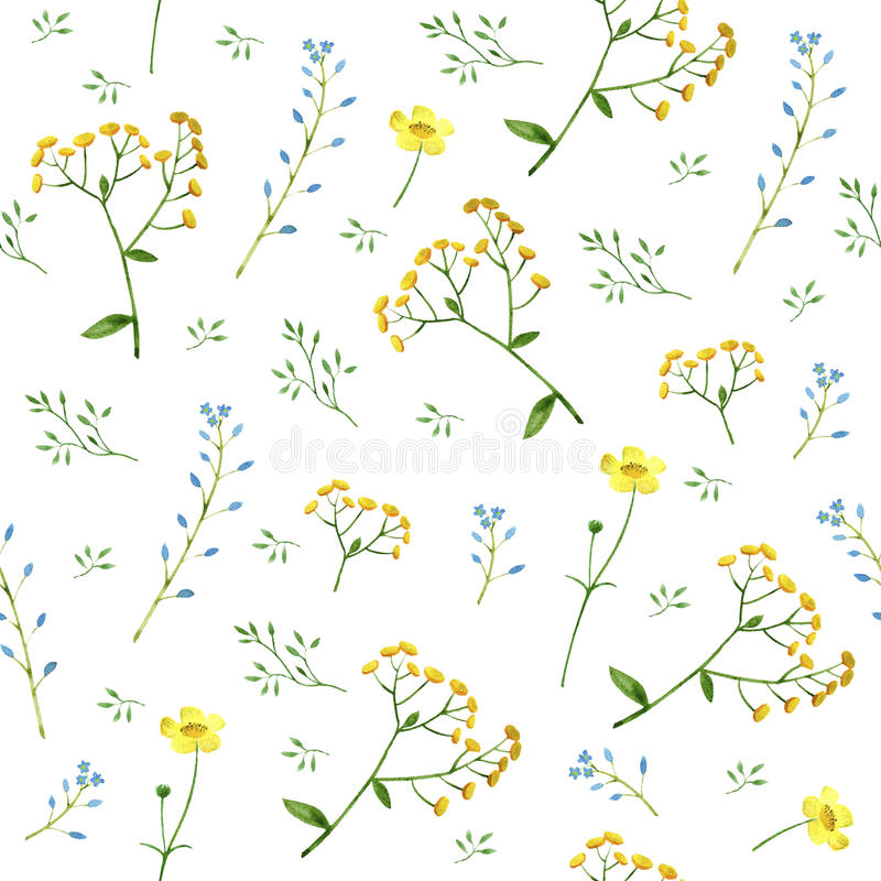 Il modello floreale variopinto con nontiscordardime, il tanaceto ed il ranuncolo fiorisce illustrazione vettoriale