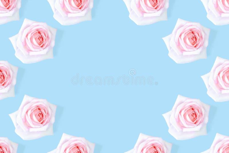 Il modello rosa rosa è incorniciato contro un fondo blu fotografia stock