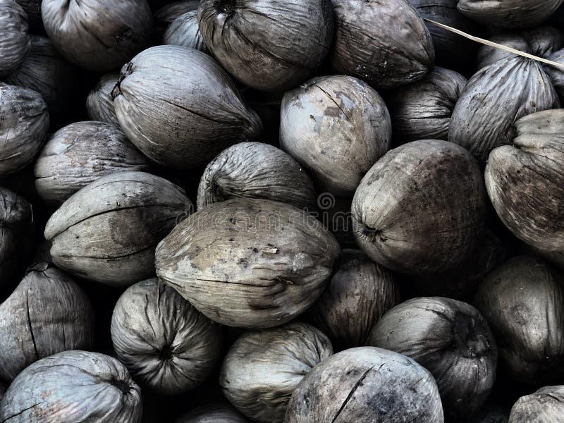 Il modello secco sulla terra, noce di cocco della noce di cocco è materia prima di alimento e cosmetico in Asia fotografia stock