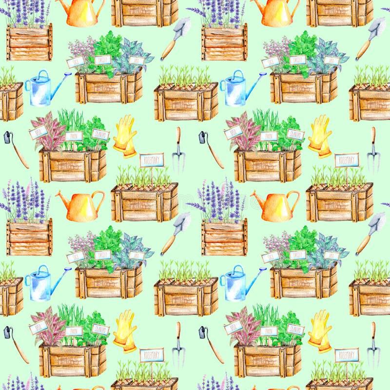 Il modello senza cuciture con l'acquerello isolato aromatizza le erbe piccanti in contenitori di legno e strumenti di giardino royalty illustrazione gratis