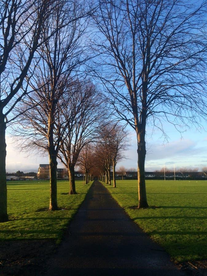 Il modo in avanti con gli alberi nudi a Dublino, Irlanda fotografie stock libere da diritti