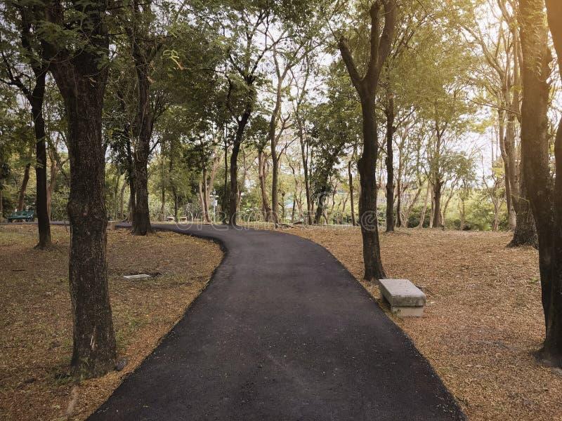 Il modo drammatico del percorso di asfalto nel parco pubblico di autunno di caduta con luce calda per fondo, si rilassa o il tono fotografie stock libere da diritti