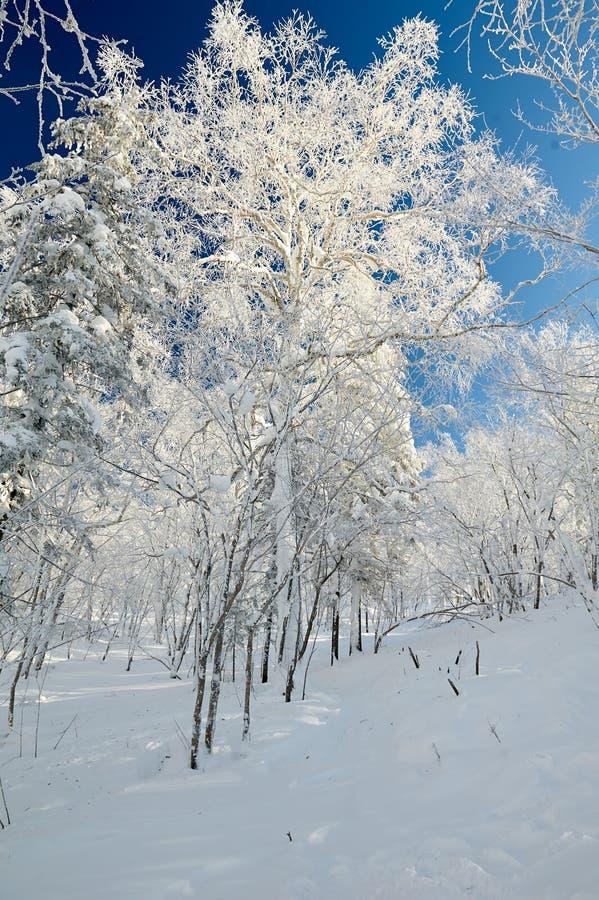 Il mondo bianco puro sulla montagna fotografia stock