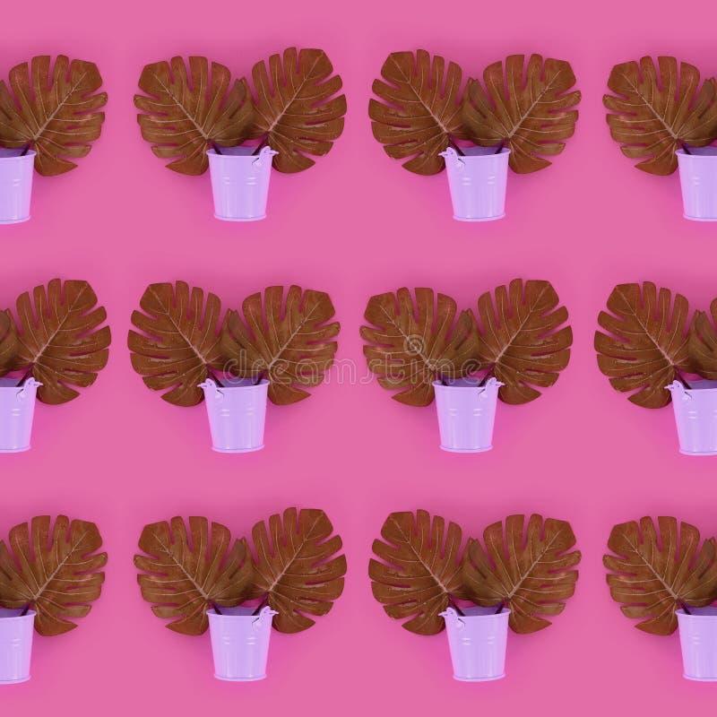 Il monstera tropicale della palma lascia a bugie nei secchi pastelli su un fondo colorato Modello minimo d'avanguardia posto pian fotografie stock