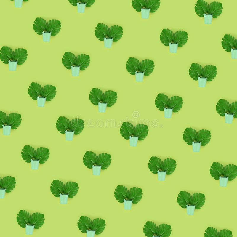 Il monstera tropicale della palma lascia a bugie nei secchi pastelli su un fondo colorato Modello minimo d'avanguardia posto pian immagine stock libera da diritti