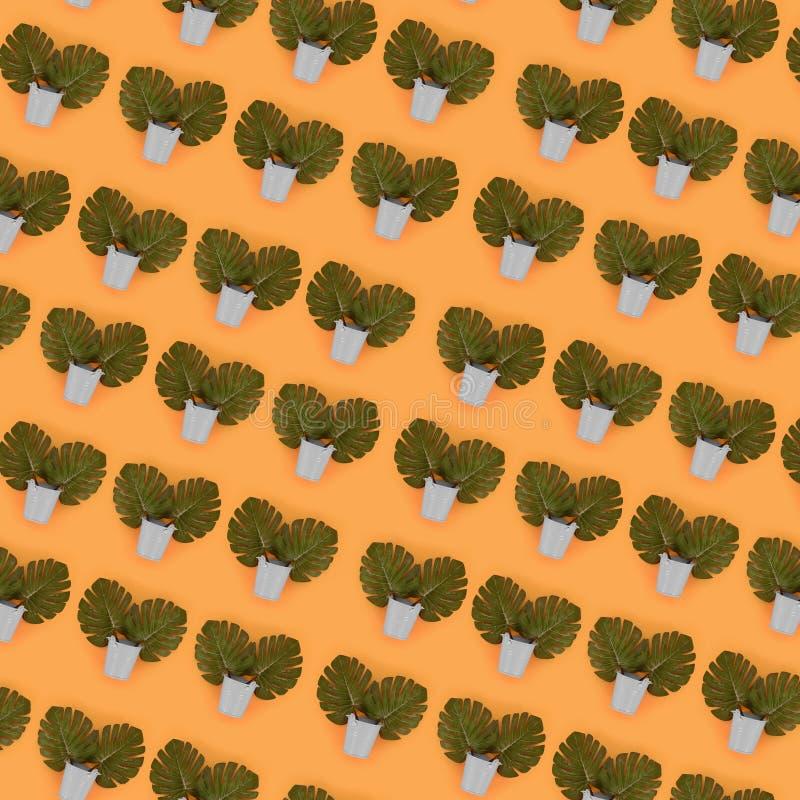 Il monstera tropicale della palma lascia a bugie nei secchi pastelli su un fondo colorato Modello minimo d'avanguardia posto pian immagine stock