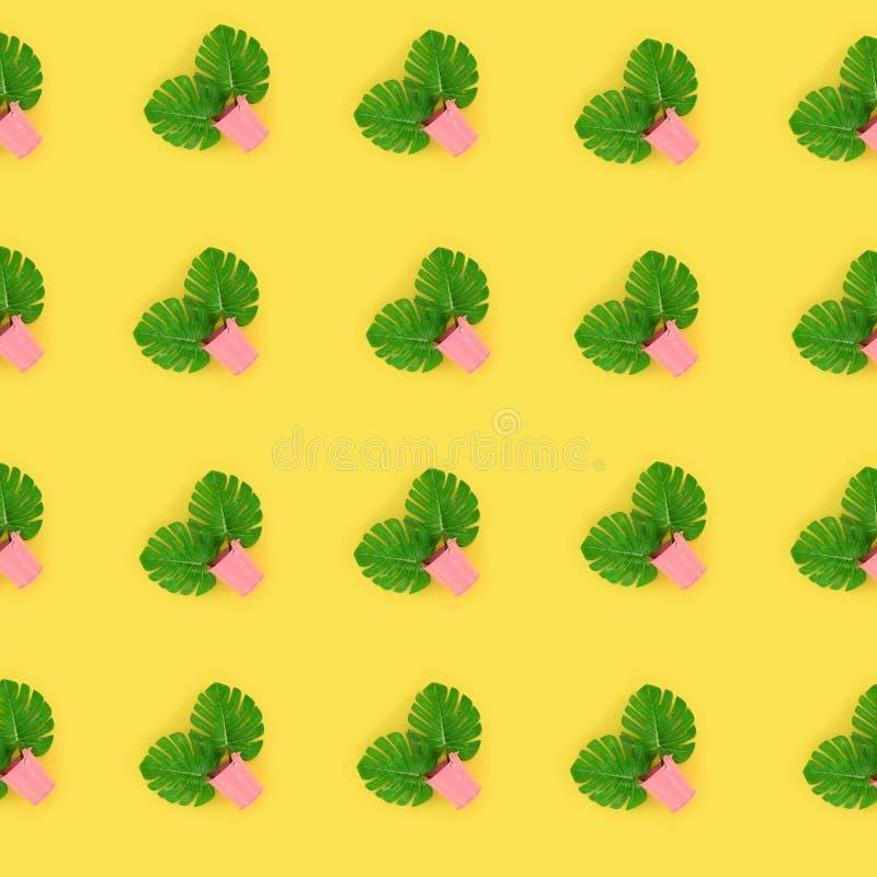 Il monstera tropicale della palma lascia a bugie nei secchi pastelli su un fondo colorato Modello minimo d'avanguardia posto pian immagini stock libere da diritti