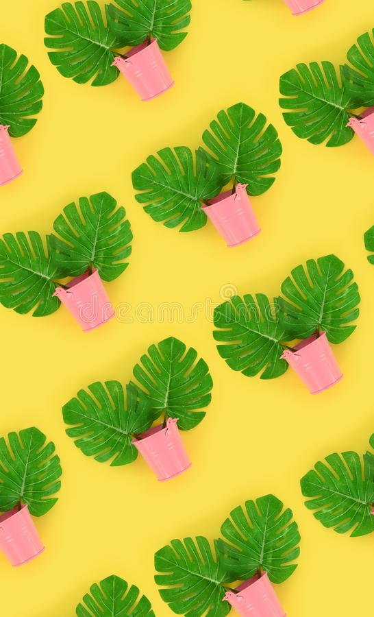 Il monstera tropicale della palma lascia a bugie nei secchi pastelli su un fondo colorato Modello minimo d'avanguardia posto pian fotografia stock libera da diritti