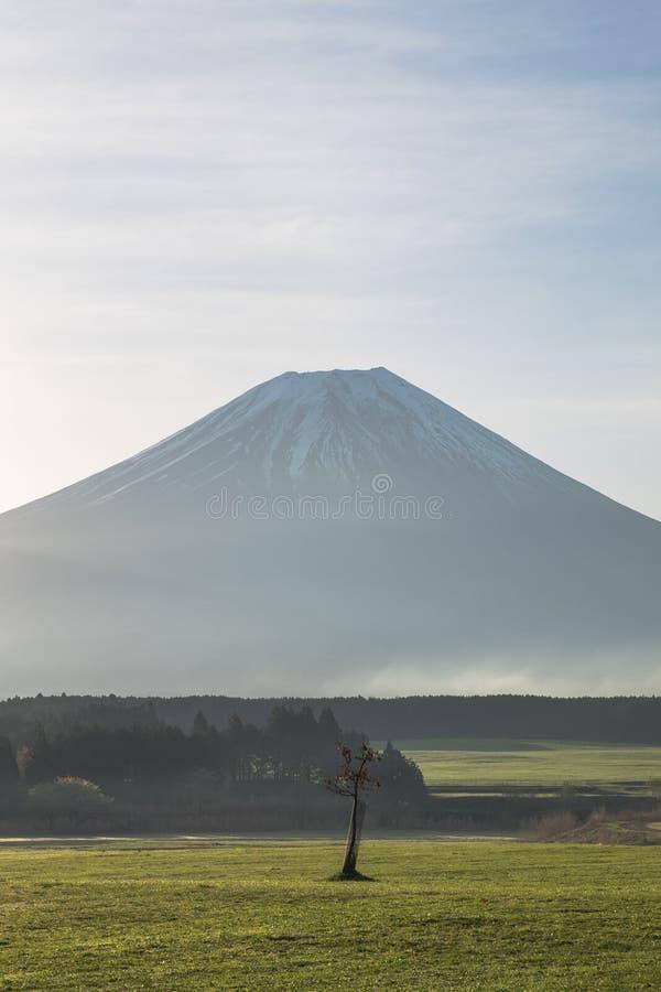 Il monte Fuji con il piccolo albero di mattina fotografia stock libera da diritti