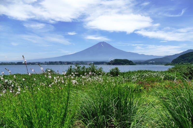 Il monte Fuji nei precedenti, erba verde fertile nella priorità alta, Kawaguchiko, Giappone fotografie stock