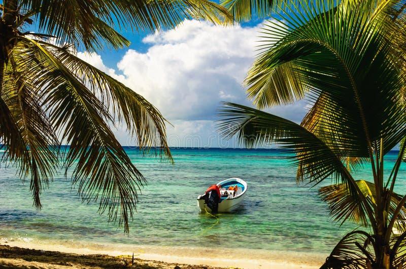 Il motoscafo bianco ha attraccato sulla costa esotica con le belle palme stupefacenti che entrano nel mare, Repubblica dominicana fotografia stock