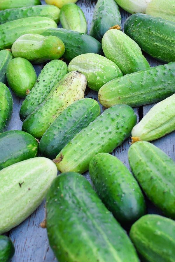 Il mucchio dei cetrioli verdi freschi con i brufoli raccoglie fotografie stock libere da diritti