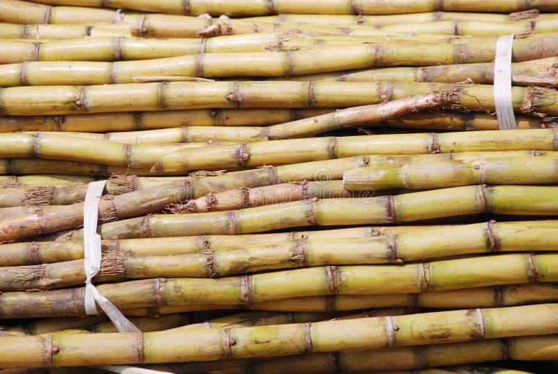 Il mucchio della canna da zucchero immagine stock