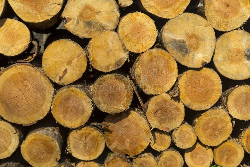 Il mucchio della dimensione differente ha tagliato i ceppi a pezzi di legno per l'inverno fotografie stock