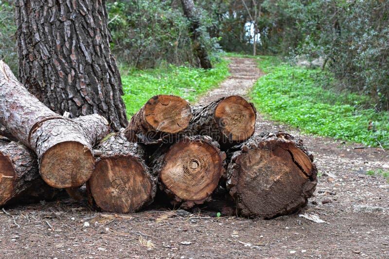 Il mucchio della quercia abbattuta collega la foresta immagini stock