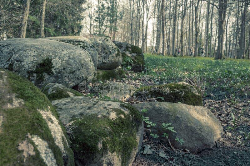 Il muschio e le pietre hanno catturato nella foresta in primavera immagine stock libera da diritti