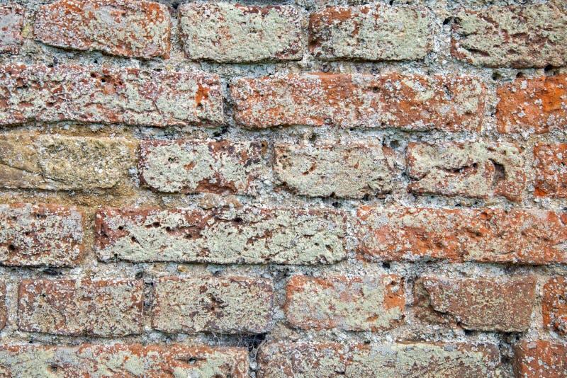 Il muschio ed il lichene hanno riguardato la struttura del muro di mattoni fotografia stock libera da diritti