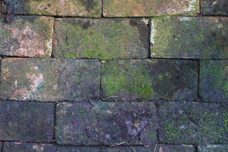 Il muschio o il lichene ha coperto la parete di pietra fotografia stock libera da diritti
