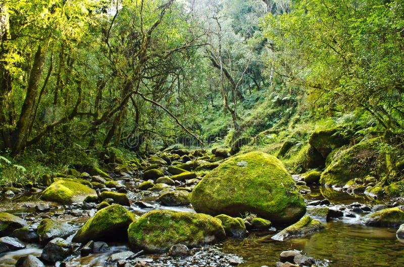 Il muschio verde ha coperto i massi in una radura leavy del fiume fotografie stock