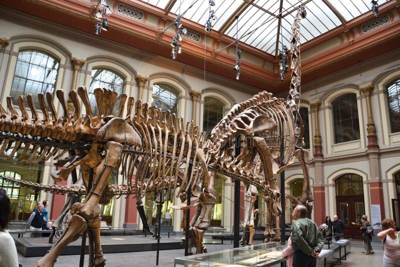 Il museo di storia naturale - Berlino immagini stock libere da diritti