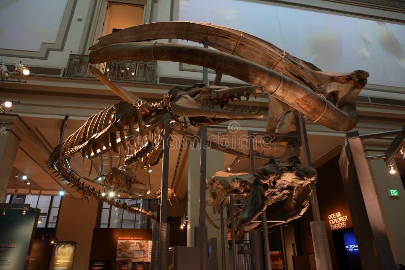 Il museo nazionale di storia naturale fotografia stock