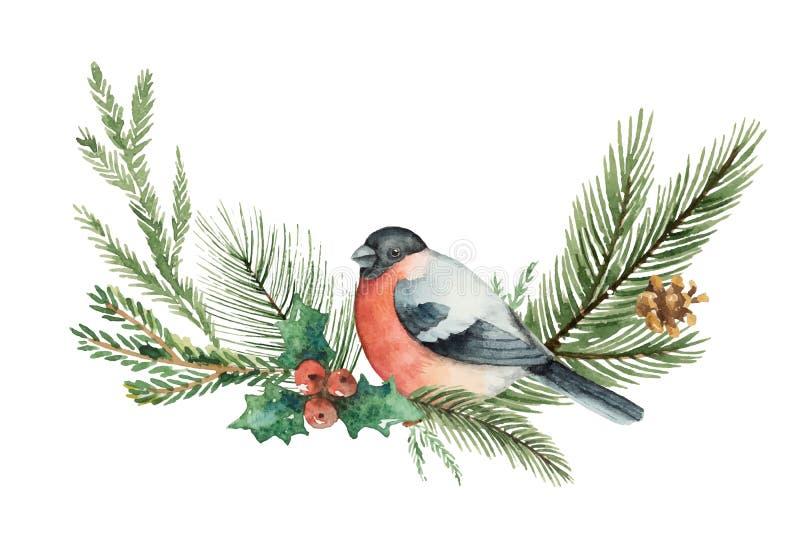 Il Natale di vettore dell'acquerello si avvolge con i rami ed il ciuffolotto dell'abete illustrazione vettoriale