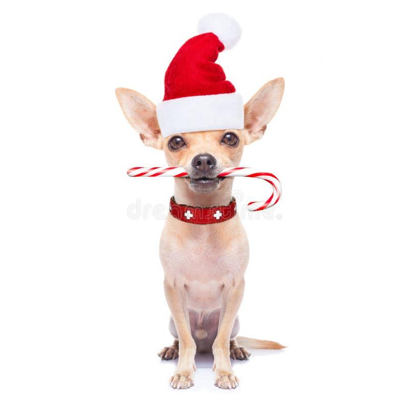 Il Natale insegue come Babbo Natale immagini stock libere da diritti